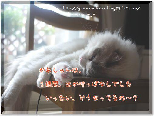 01-K6T7Tb7N7OSIz3G1408016742_1408016920.jpg