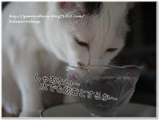 01-KqZ3kM_UfdXcPDK1394803622_1394803681.jpg