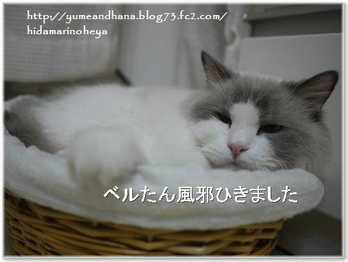 01-カゼひきベルたん140221