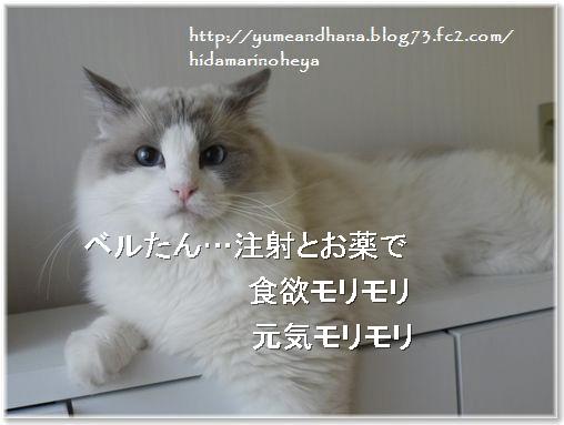 01-ベルたん元気140221