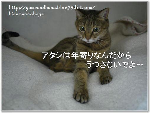 01-モカ140221