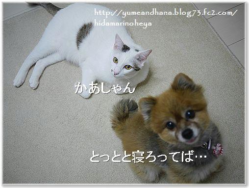 01-ゆめ&ココ14221