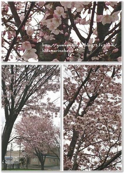 001-桜140505