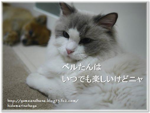 001-ベルたんとゆめ1409192