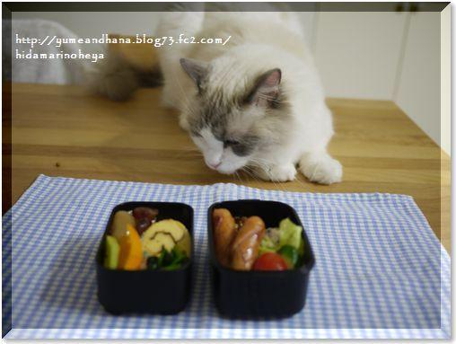 01-お弁当とベル140110