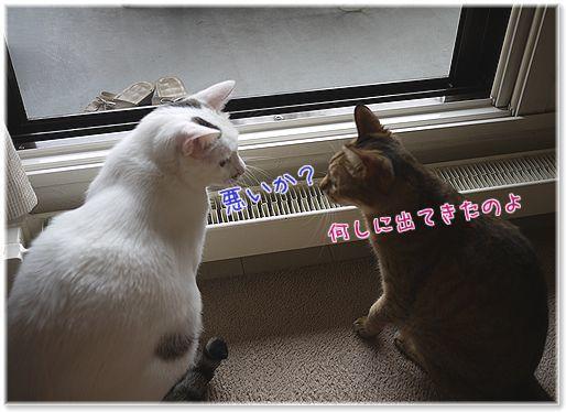 01-jaモカココ睨み合い140725