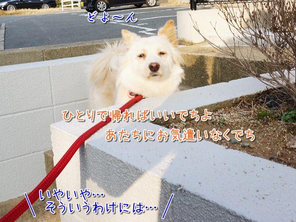 20140221_4.jpg