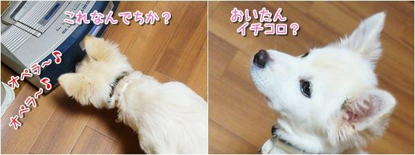 20140315_4.jpg
