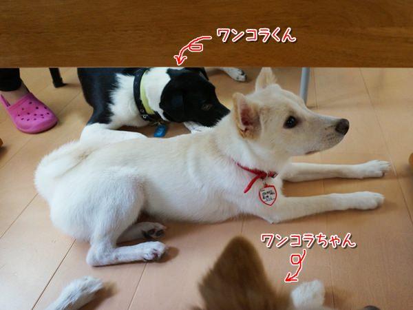 20140610_9.jpg