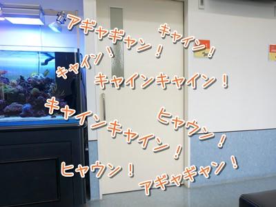 20140717_5.jpg