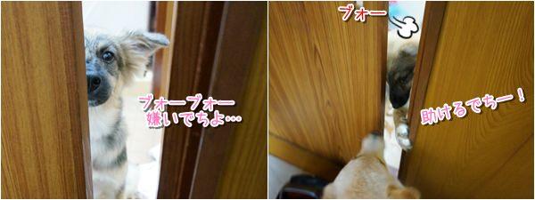 20140917_8.jpg