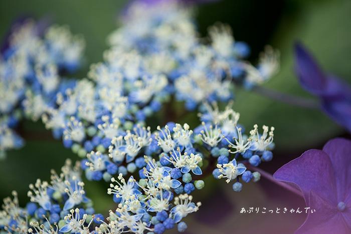 IMG_9490.jpg