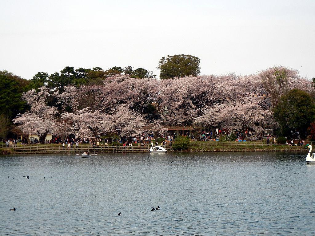 洗足池桜山