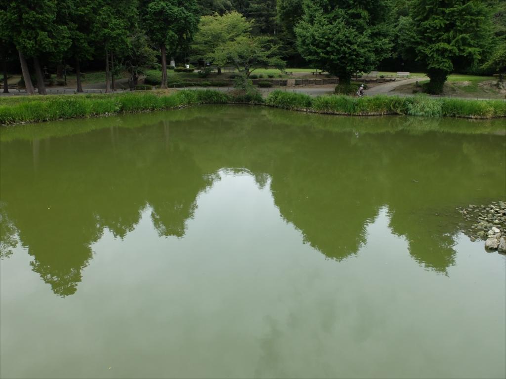 橋の上から見た阿字ヶ池の左側の様子