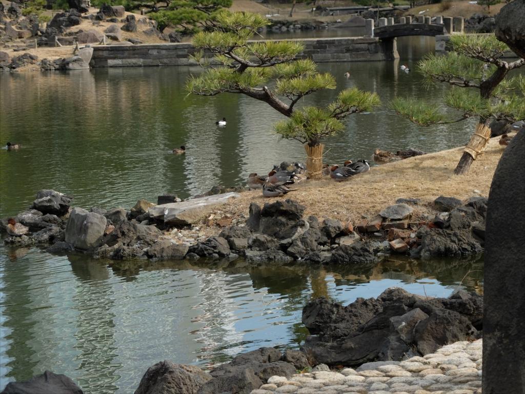 池にそって歩を進めてみよう_3