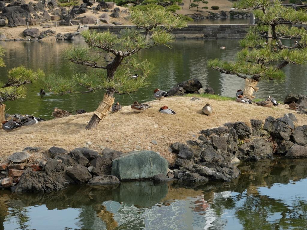 池にそって歩を進めてみよう_4