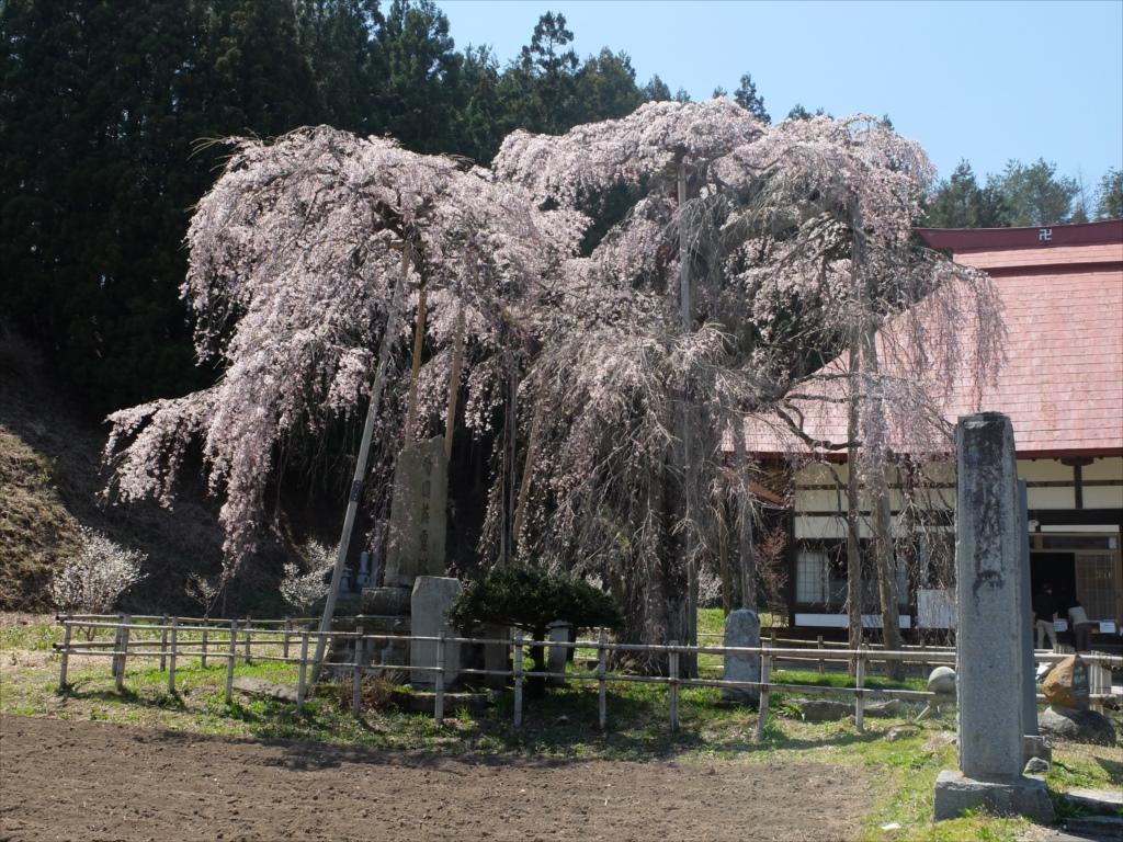 樹齢約400年の大木(福島県の天然記念物)_6