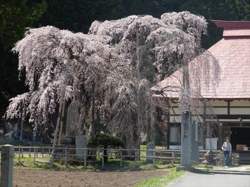 樹齢約400年の大木(福島県の天然記念物)_8