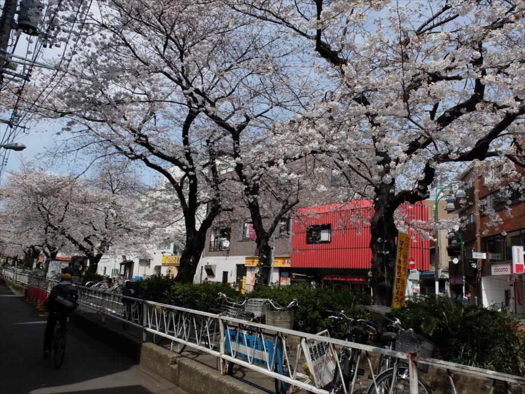 日中の桜_X-20_1