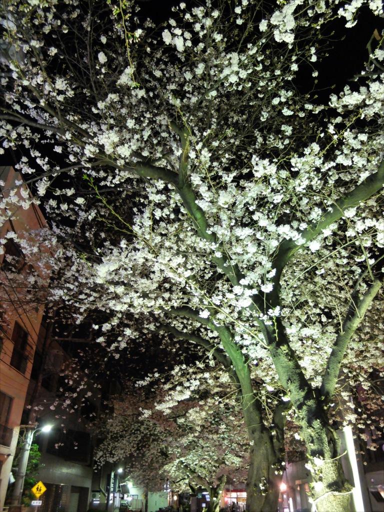 夜間の桜_X-20_2