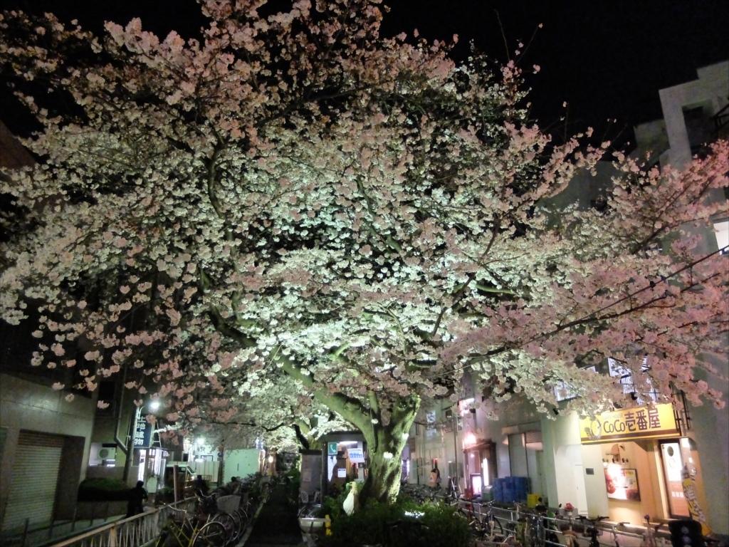 夜間の桜_X-20_3