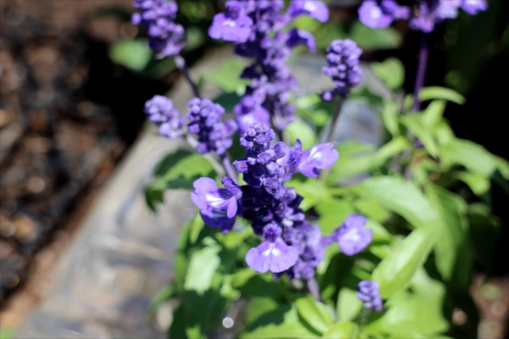 花壇の花_2