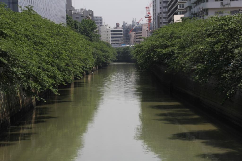目黒川_2
