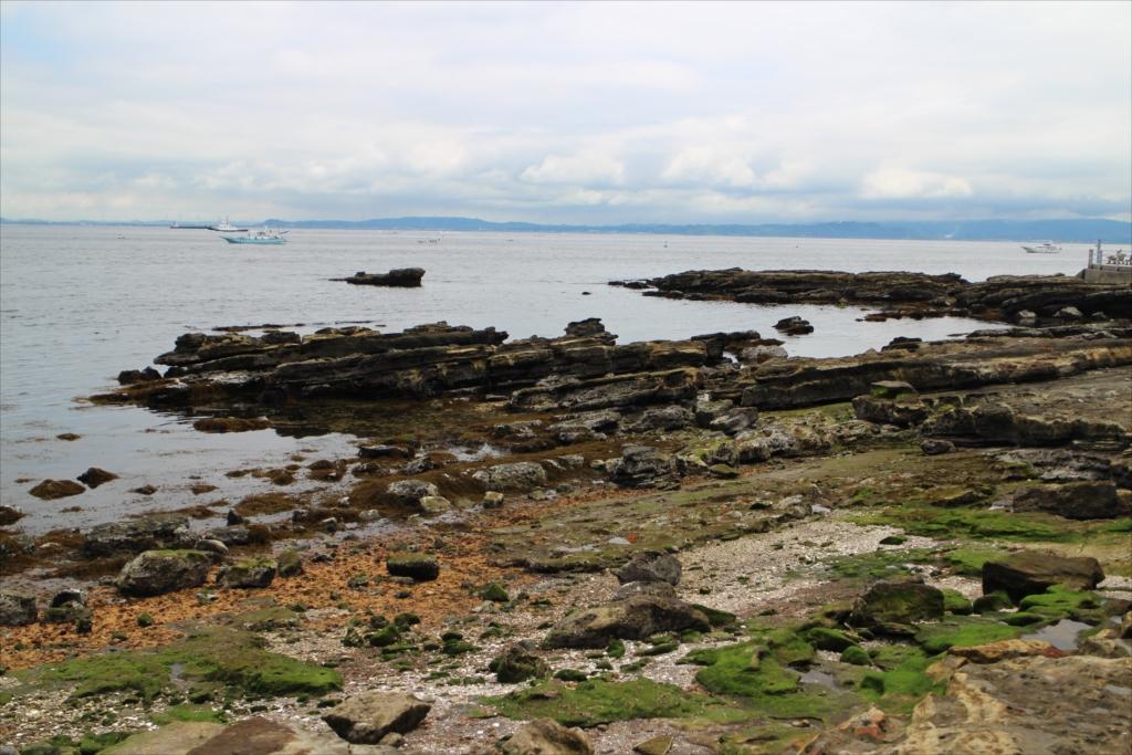 三浦半島にはこういう岩礁が目立つ_3