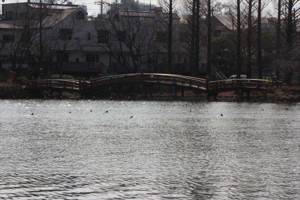 池月橋_2