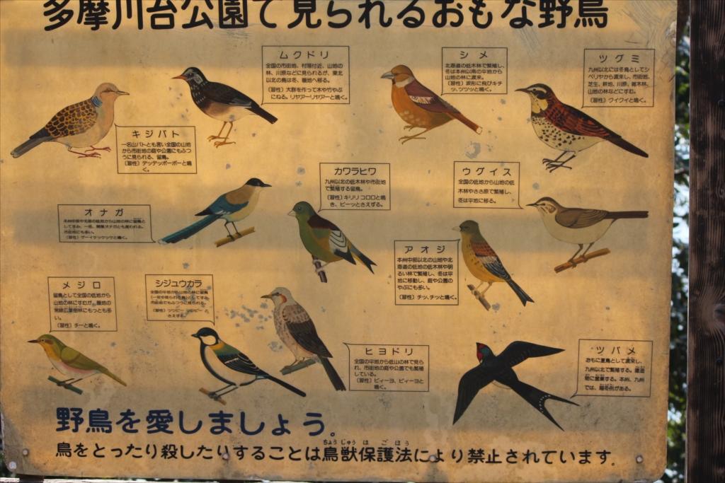 この公園で見る事ができる鳥さん