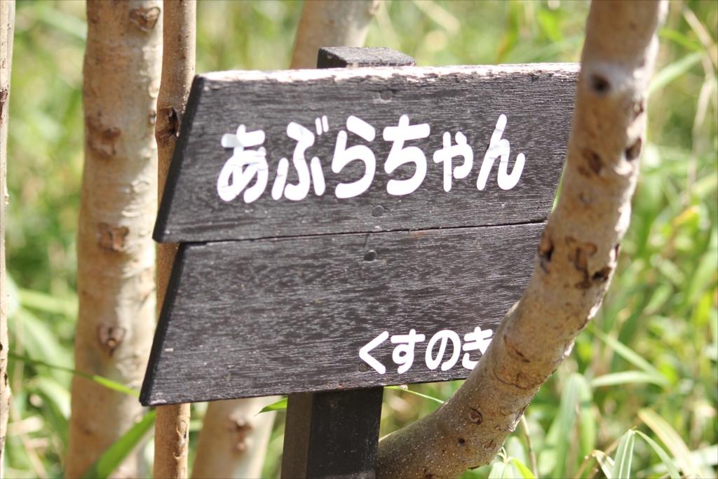 あぶらちゃん(油瀝青)_1