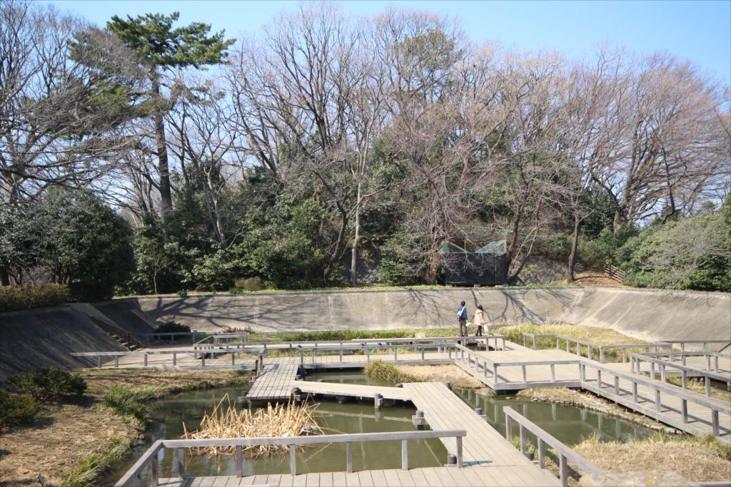 水生植物園から見た亀甲山古墳の後円部