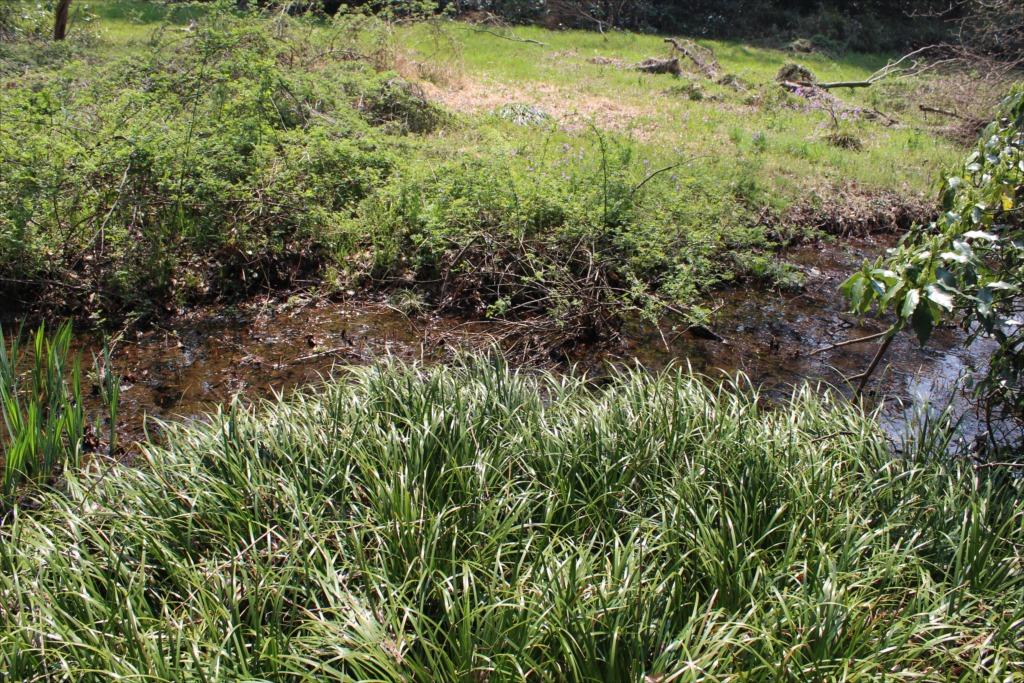 小川と湿地_1