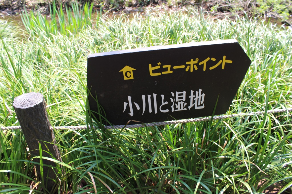 小川と湿地_3