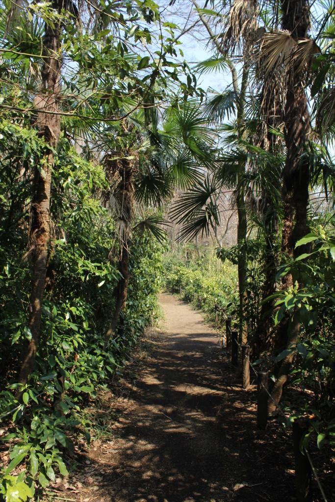 都心には棕櫚が増えている_2