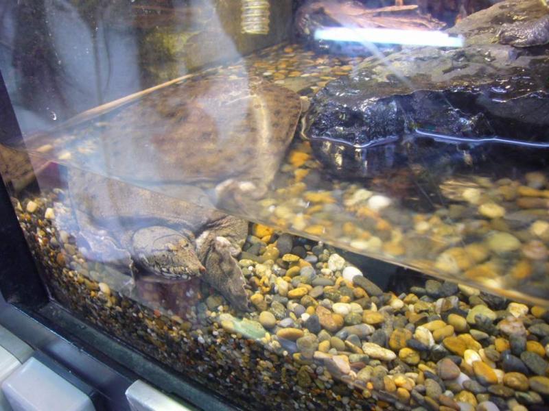 淡水魚水族館