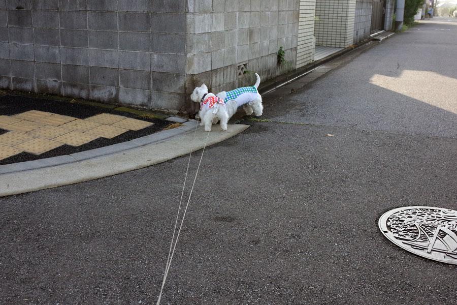 futaritomoguzuguzudesa2.jpg