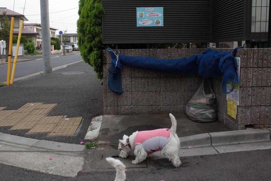 koryamazuidesyoga1.jpg