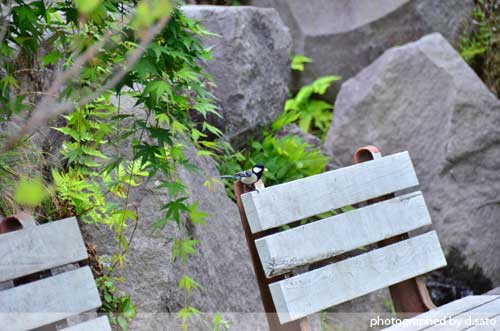 群馬県 藤岡 観光 土と火の里公園 昼食 ランチ 13