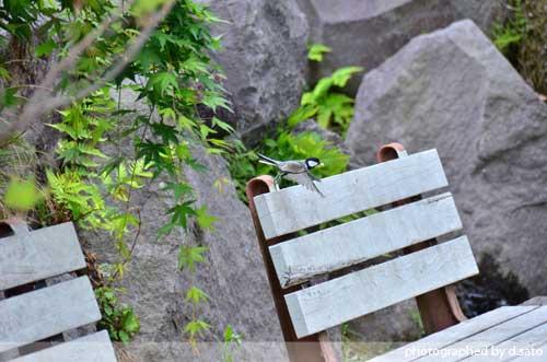 群馬県 藤岡 観光 土と火の里公園 昼食 ランチ 14