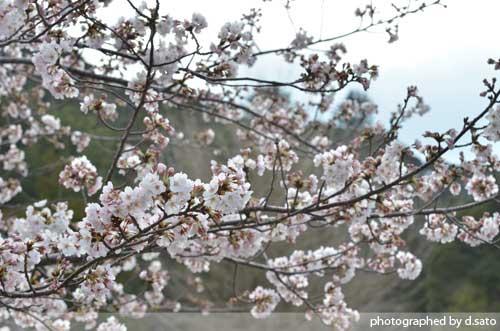 千葉県 館山市 観光 レジャー 野鳥の森 安房神社 口コミ10