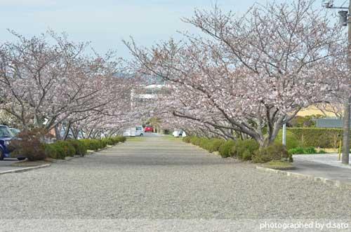 千葉県 館山市 観光 レジャー 野鳥の森 安房神社 口コミ11