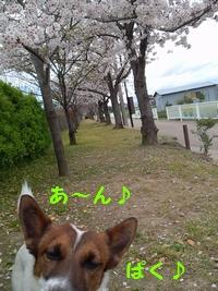 2014041105274134c.jpg
