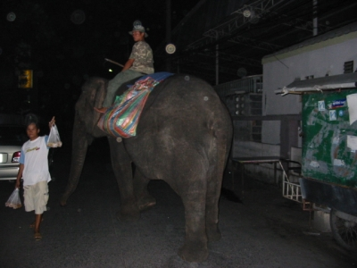 Elephant in Thai-01