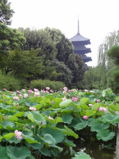 Toji-20130808.jpg