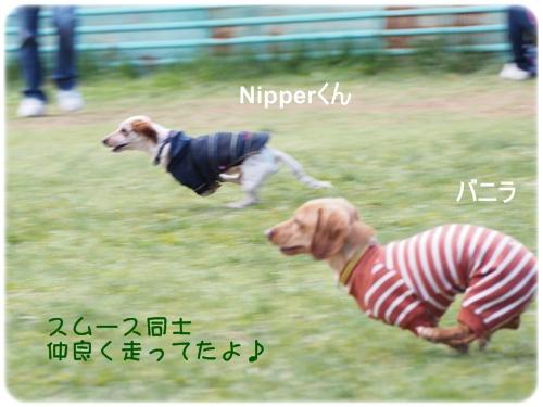 Nipperとバニラ