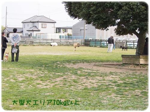 大型犬エリア