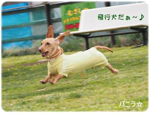 飛行犬バニラ
