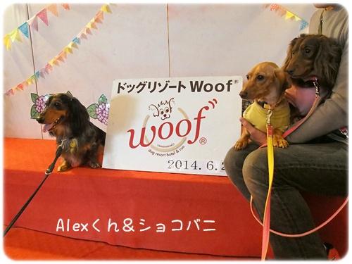 Woof Alexくんとショコバニ