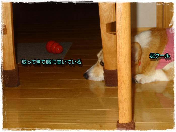 DSC08280.jpg